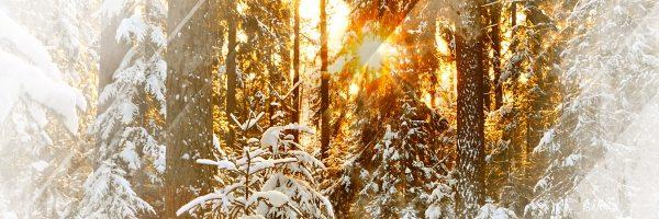 Sergey Lagutin – Frosty Morning