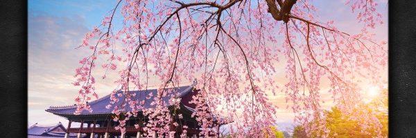 Masaru Hinaiji – Spring EP